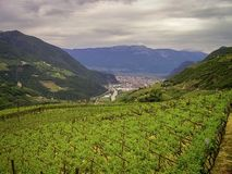Vingårdar nästan staden av Bolzano i dolomitesna, Italien royaltyfri fotografi