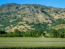 Vingårdar Napa Valley CA Arkivbild