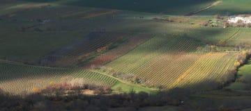 Vingårdar nedanför Palava kullar i södra Moravia in Arkivbild