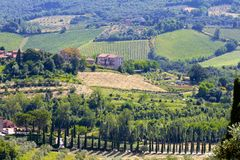 Vingårdar och Cypern träd i Tuscany, Italien royaltyfri fotografi