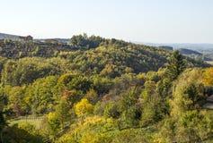 Vingårdar och färgrika träd, Kroatien Arkivbild