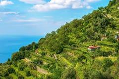 Vingårdar och fruktträd som täcker en brant terrasserad backe som förbiser medelhavet i Italien royaltyfri bild