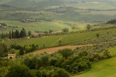 Vingårdar och olivgröna dungar på en Tuscan backe arkivbilder