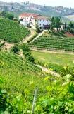 Vingårdar och vinodling i Piemont Arkivfoton