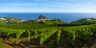 Vingårdar och vinproduktion med det Cantabrian havet i bakgrunden royaltyfri foto