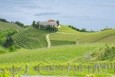 Vingårdar och vitt vin för lantgård för tillverkning av Royaltyfria Bilder