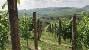 Vingårdar på de Langhe kullarna near La Morra, Piedmont - Italien stock video