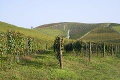 Vingårdar på kullarna av Langhe Arkivbilder