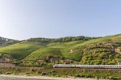 Vingårdar på lutningar av Bopparder Hamm över Rhendalen, Tyskland som en snälltåg passerar under royaltyfria bilder
