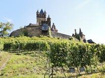 Vingårdar under Cochem den imperialistiska slotten, Moselle Royaltyfri Bild
