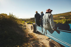 Vingårdarbetare som transporterar druvor till vinfabriken Royaltyfria Bilder