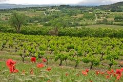 Vingårdarna av Provence Arkivbild