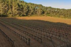Vingårdarna: strömförsörjningen och den nödvändiga grunden av vin Arkivfoto