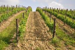 vingårdbarn Royaltyfri Fotografi