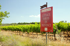 Vingården av Varois i Provence Royaltyfria Bilder