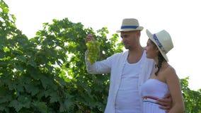 Vingården par skördar skördar med korgen i hand och går på fält i solljus lager videofilmer