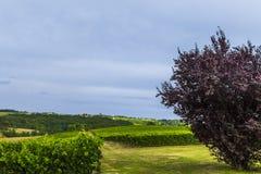 Vingårdfält Bordeaux Frankrike Arkivbilder