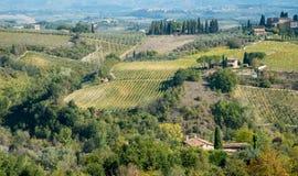 Vingårdfält i San Gimignano, Tuscany område, Italien Royaltyfria Bilder