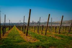 Vingårditalienare sätter in vin royaltyfri bild