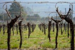 Vingårditalienare sätter in vin royaltyfri foto