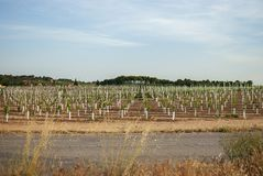 Vingårdlandskap med bevattningsystemet med droppande av vatten, på solnedgången Raïmat viner Caberneet Sauvignon Merlot syrah, Py arkivfoto