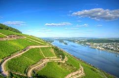 Vingårdlandskap med Rhine River, Ruedesheim, Hessen Tyskland royaltyfri fotografi