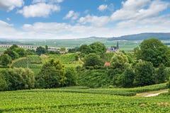 Vingårdlandskap, Montagne de Reims, Frankrike Fotografering för Bildbyråer
