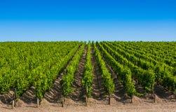 Vingårdlandskap nära Bordeaux, Frankrike Arkivfoto