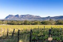 Vingårdlandskap som vänder mot ett berg med blå himmel royaltyfria foton