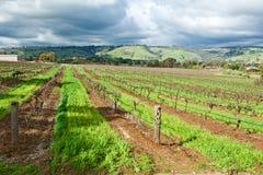 vingårdvinter Royaltyfria Bilder
