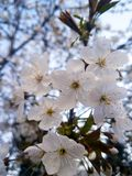 Ving de eerste bloemen in dit jaar stock fotografie