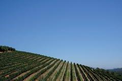 Ving?rden p? det Tokara vingodset, Cape Town, Sydafrika som tas p? en klar dag Vinrankorna planteras i rader p? backen royaltyfria foton