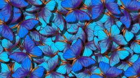 Vingar av en fjäril Morpho Flyg av abstrakt bakgrund för ljusa blåa fjärilar arkivfoto