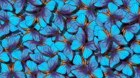 Vingar av en fjäril Morpho Flyg av abstrakt bakgrund för ljusa blåa fjärilar fotografering för bildbyråer