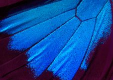 Vingar av en fjäril Ulysses Vingar av en fjärilstexturbakgrund arkivbild