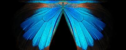 Vingar av en fjäril Ulysses Vingar av en fjärilstexturbakgrund closeup arkivfoto