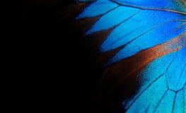 Vingar av en fjäril Ulysses Vingar av en fjärilstexturbakgrund closeup arkivbilder