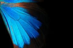 Vingar av en fjäril Ulysses Vingar av en fjärilstexturbakgrund closeup royaltyfria bilder