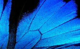 Vingar av fjärilen Ulysses closeup Arkivfoton