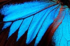 Vingar av fjärilen Ulysses closeup Royaltyfri Fotografi