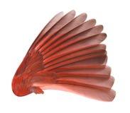 vinge för fågelclippingbana arkivbild