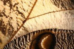 vinge för fjärilsmodell Royaltyfri Bild