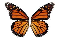 Vinge för monarkfjäril arkivbilder