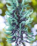 Vingerhoedskruid of digitalis met mauve bloemen Royalty-vrije Stock Foto