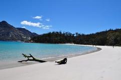 Vinglasfjärd, vit sandstrand med träpinnen i Tasmanien royaltyfri fotografi