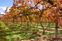 vingård för town för africa områdesudd södra Fotografering för Bildbyråer