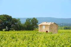 Vingård i söder-Frankrike Arkivfoto