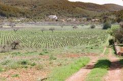 Vingård i Spanien Royaltyfri Foto