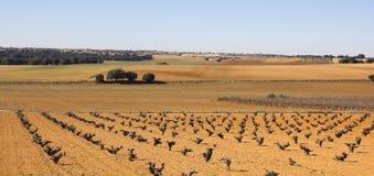 Vingårdar i Castilla Arkivfoto