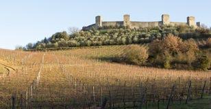 Vingårdar i monteriggionien för vinter nästan, Tuscany, Italien Royaltyfria Foton